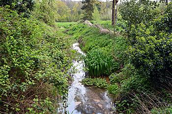 Flitwick mill stream April 2017