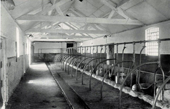 Cow shed at Priory Farmhouse in 1925