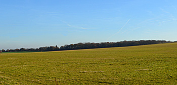 Flitwick Wood seen from Flitwick Road 1st December 2016